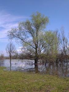 albero acqua2