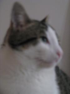 gatto pensante