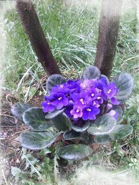 violenonno