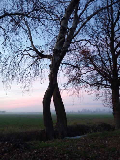 alberi_rid